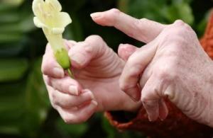 Что из трав поможет при артрите