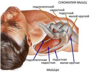 Как устроен плечевой сустав